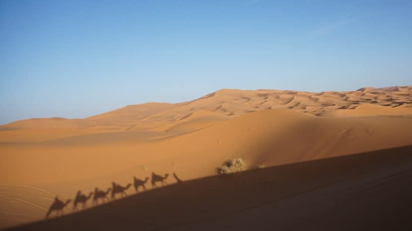 Camels and Desert