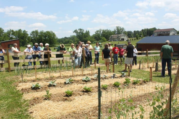 A group of people visiting a farming gardening plot.