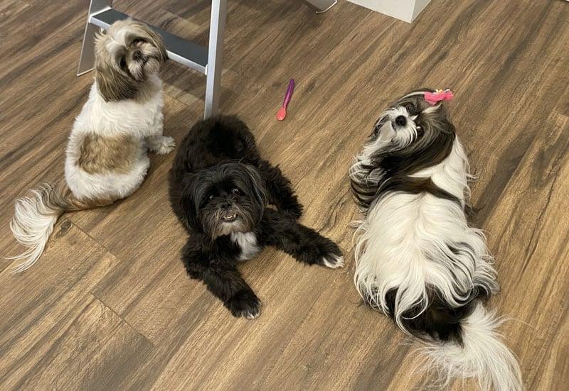Jada, Oreo and Millie