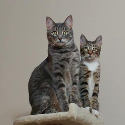 Rose cats