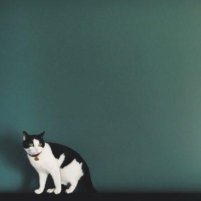 Susannah cat