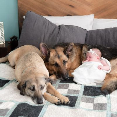 stephie predmore's dogs snuggling with her baby girl