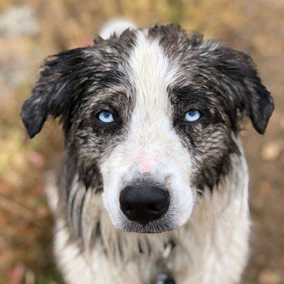 paige dodd's dog, atlas