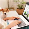 person using computer next to dog