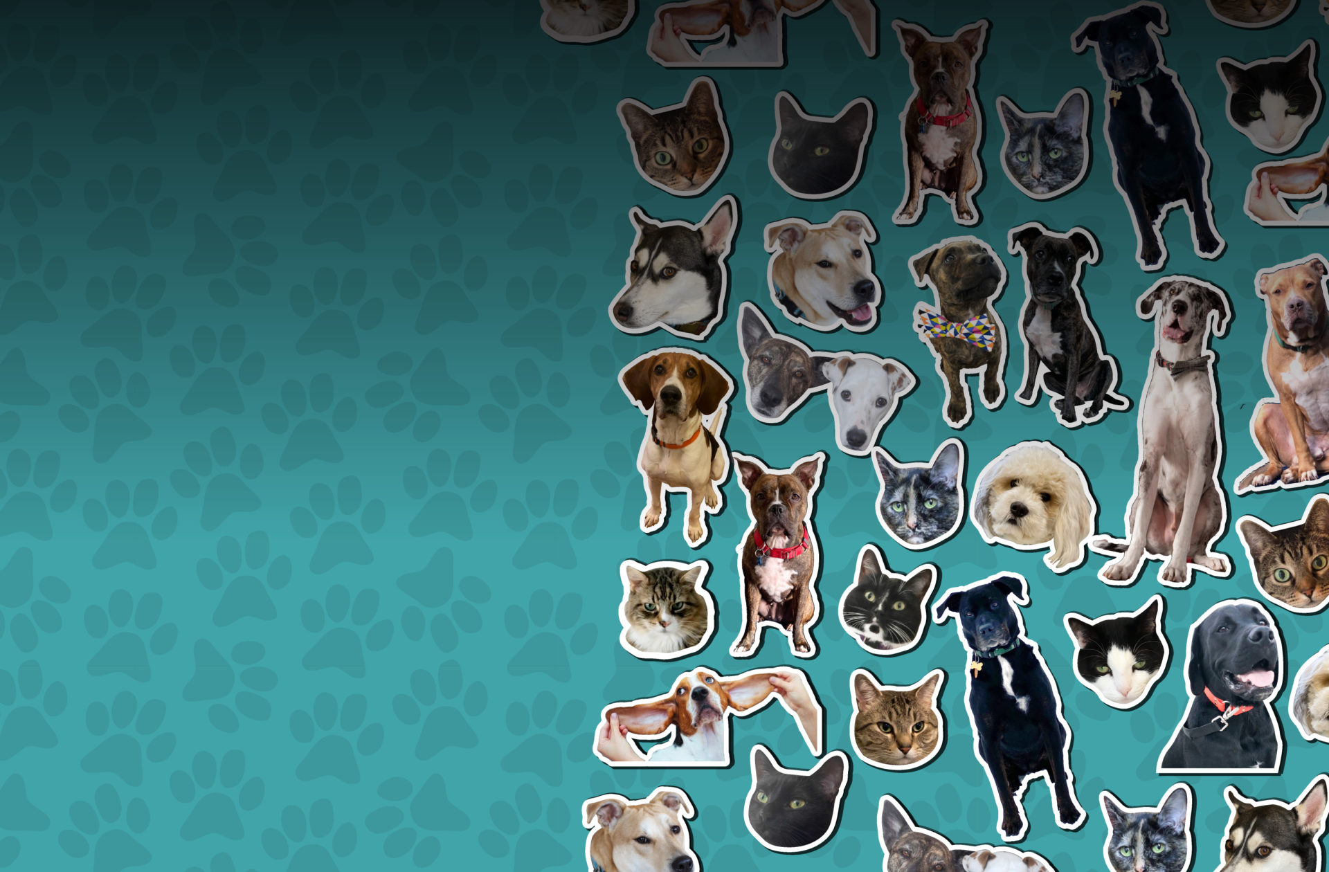 stickers of mediavine pets on a teal background