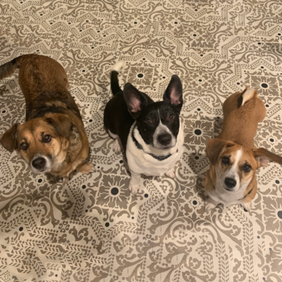 Ariel's three rescue dogs